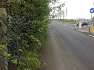 IMG_5632 Hedge Linthouse Lane