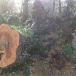 IMG_0320 Tree Churchyard