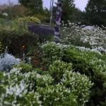 Wednesfield in bloom65370955_2719093691436474_4112411794142658560_n
