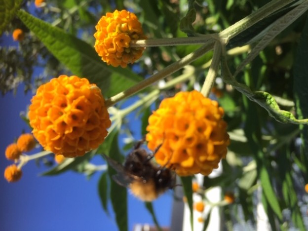 bees IMG_3377